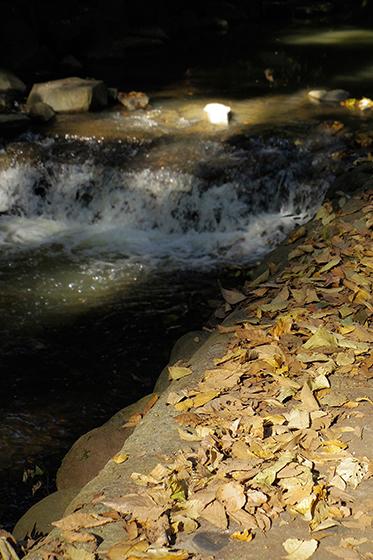 川辺の落葉