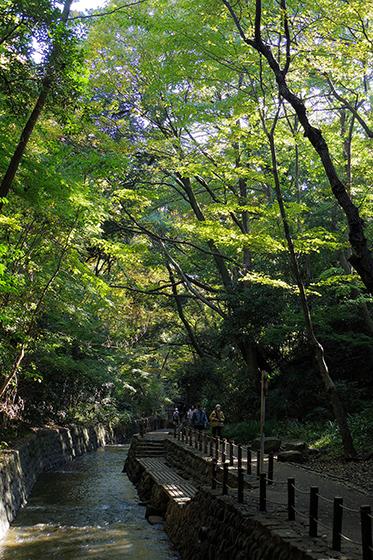 渓谷の木々